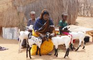 Over 116, 000 displaced in Somalia due to extreme water shortage