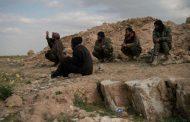 In Syrian desert, ISIS lives on stolen livestock