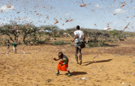 A plague of locusts blocks out the African sun, but is the UN's solution too extreme?
