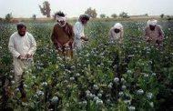U.S army destroyed Taliban drugs